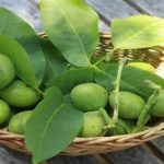 Lekovita Svojstva Mladih Zelenih Oraha