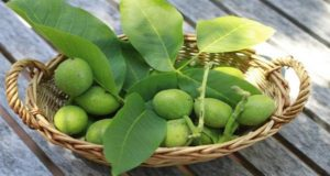 Rakija-od-zelenih-oraha